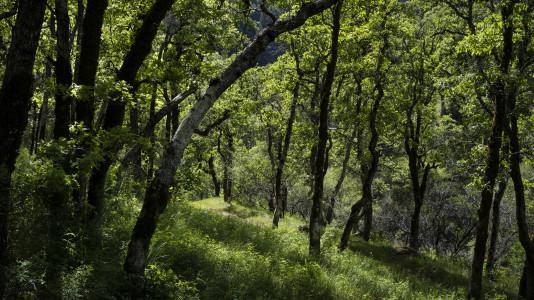 Forest Work Day Sunday Dec. 10 - Afternoon progam canceled